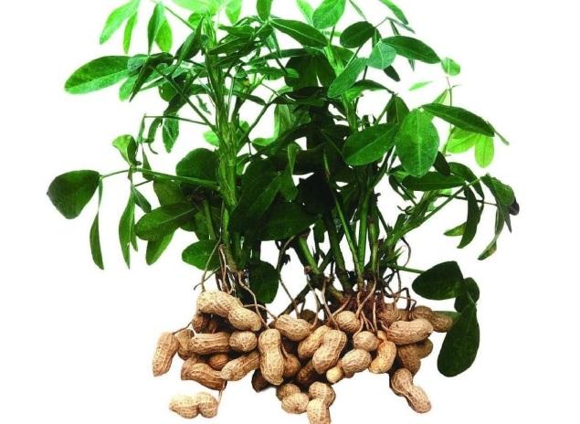 10 необычных съедобных растений