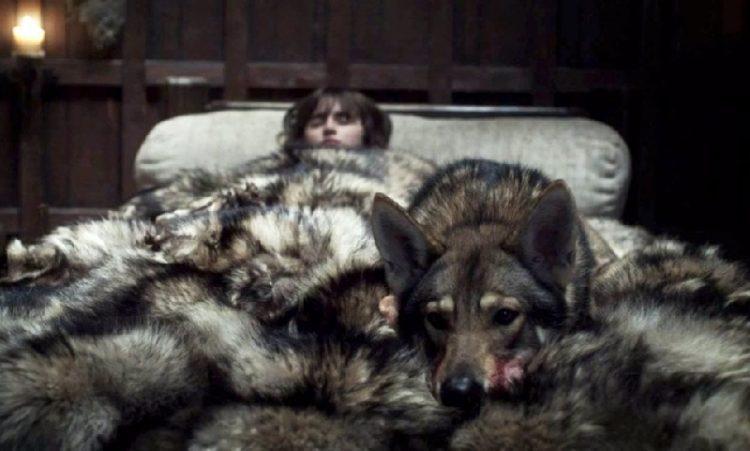Bran Direwolf