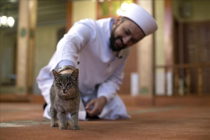 20 малоизвестных фактов о кошках