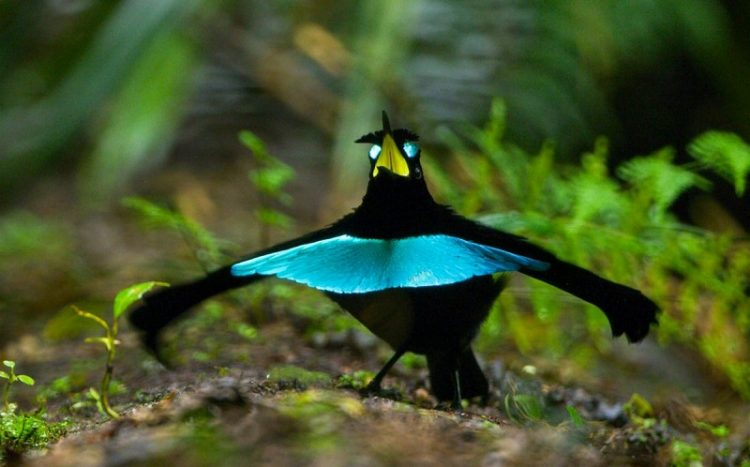rayskih ptits