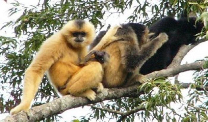 Самые редкие животные планеты
