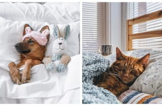 animals in bed