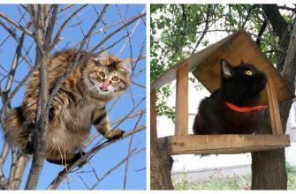 Коты на деревьях