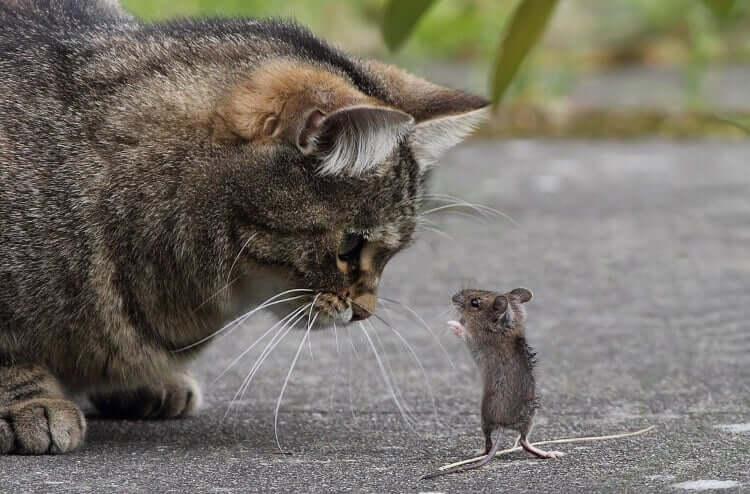 фото животных в нужный момент