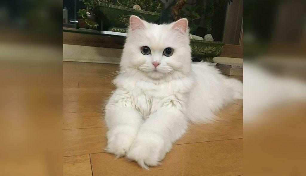 Коты, которые позируют не хуже людей: 30 фото