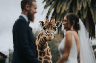 свадебные фото с животными