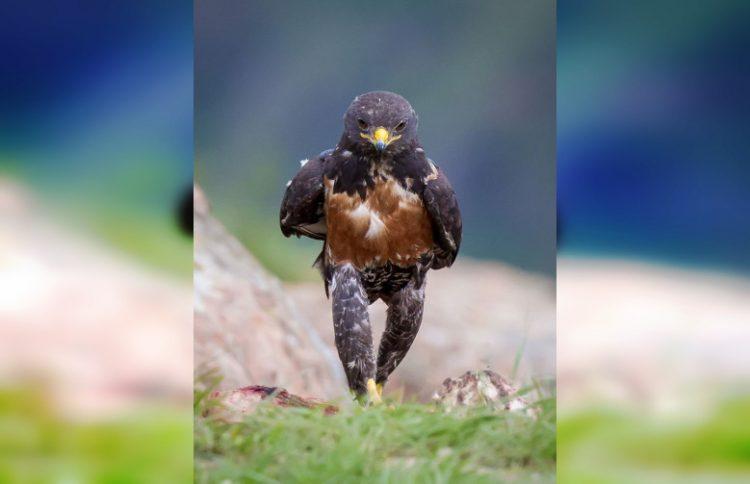 Прикольные и смешные: 30 потешных фото птиц