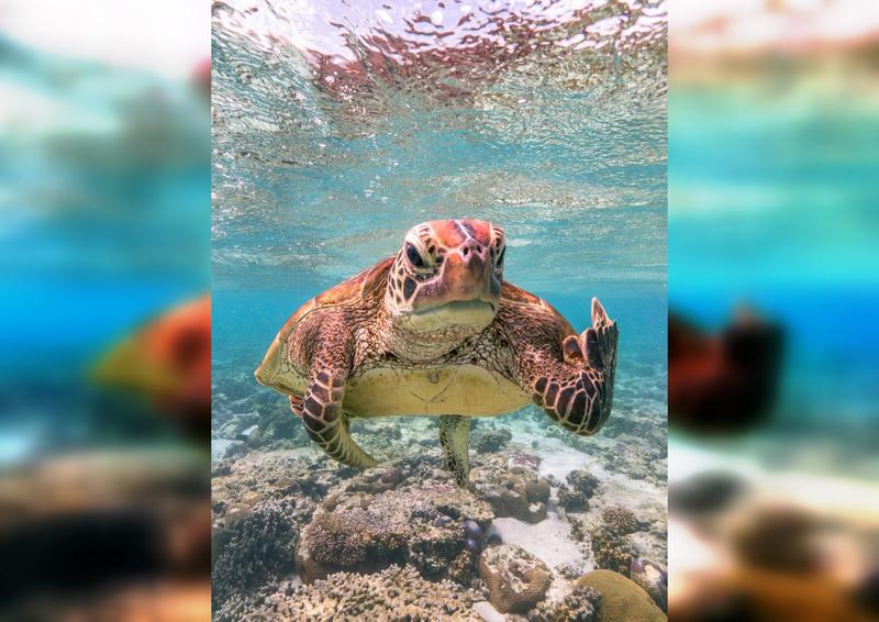 Юморные фото животных по версии Comedy Wildlife Photography Awards